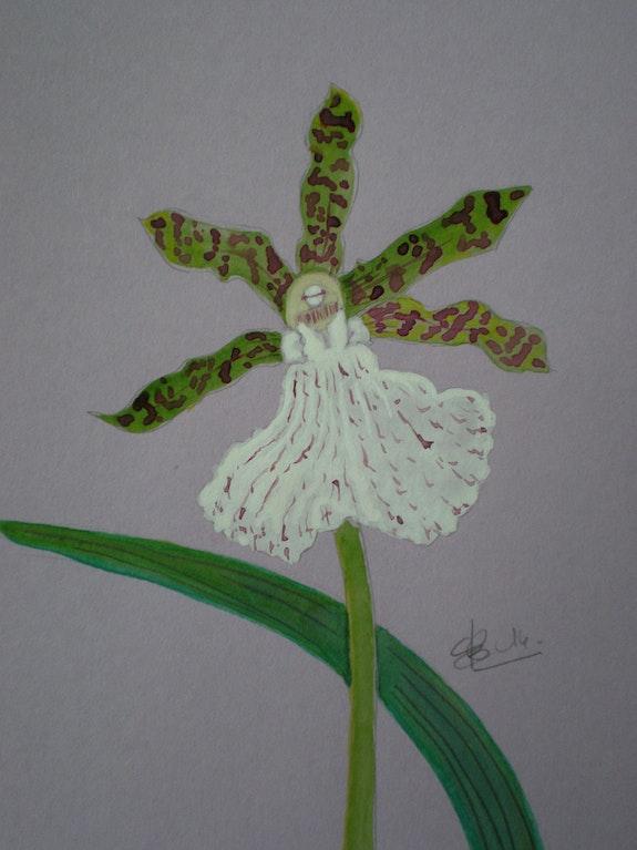 Orchidée 7. Leleu B. Brigitte Leleu