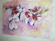 Orchidées Jolies.