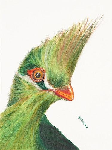Touraco vert oiseau exotique. Devy Laure