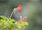 Toute la pluie tombe….