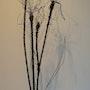 Les iris. Laurence Van Baren