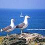 Les Mouettes, a vous la liberté, le ciel ! À vous les ailes. Didier Collignon