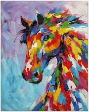 Le cheval berbère original. Alfredo