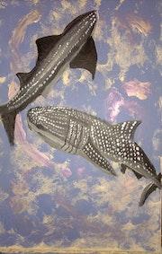 Requins baleines.