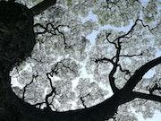 Aborescence. Solena432