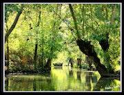 Forêt 20.