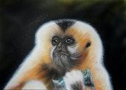 Monnaie de singe.
