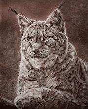 Lynx de Sibérie.