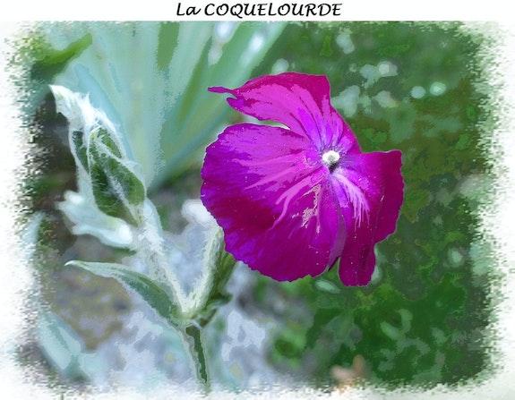 La coquelourde. Anne-Lucie Tarrie Altarrié