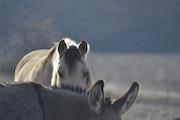 Un cheval et un âne.
