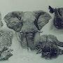 Étude d'animaux d'Afrique. Jean Camoin