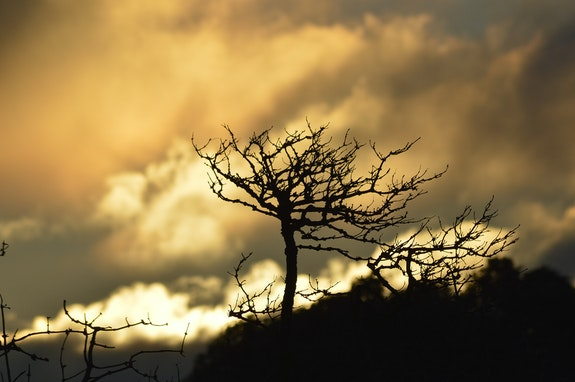 Lever de soleil en jaune. Sylvie B Mite02