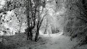 L'hiver en noir et blanc.