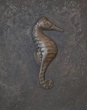 Hippocampe.