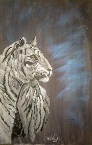 Regard de tigre.