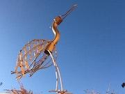 Grazy bird. Marc Kotterer