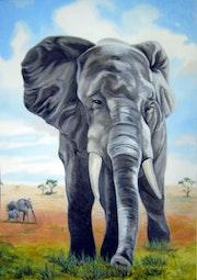 Elefant - Elephant - Éléphant.