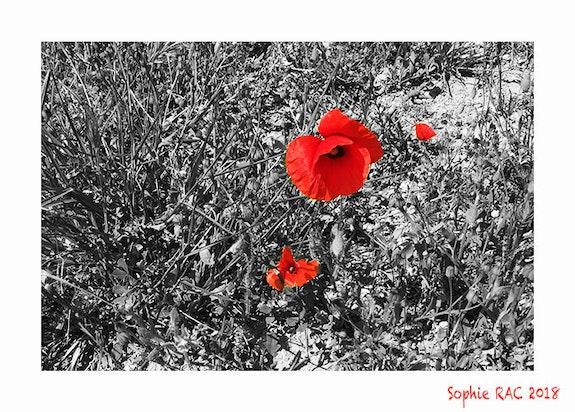 Réconfort à celui qui Souffre…. Sophie Rac Sophie Rac