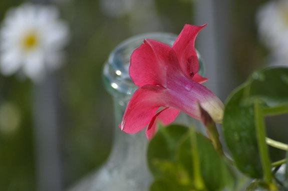 Jolie fleur du jardin. Sylvie B Mite02