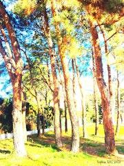 Le Secret de la Forêt….