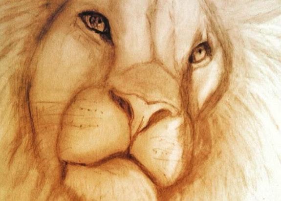 Lion. Abdel Abdel
