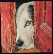 L'oeil de chien.