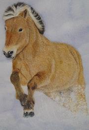 Cheval de la race Norvégienne fjord dans la neige.