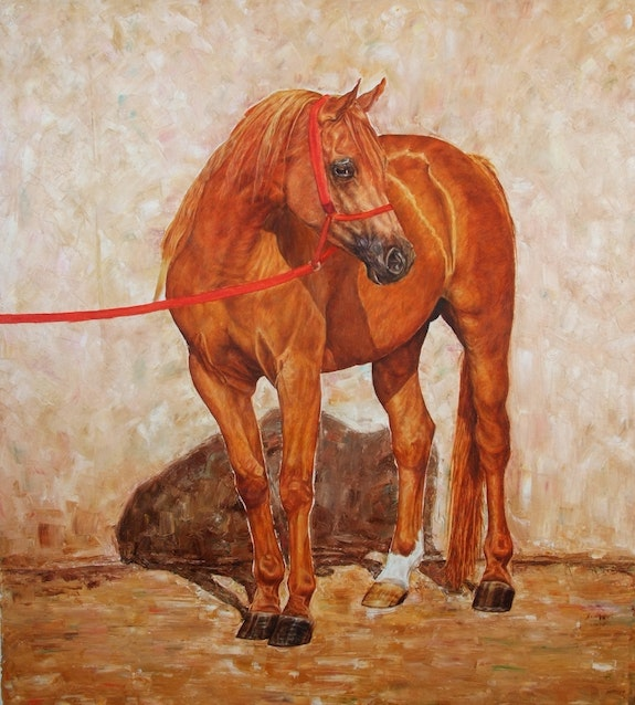 Horse standing. Horse Standing Mared Al