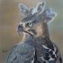 L'aigle couronné. Catherine Lccat