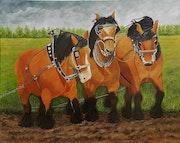 Les chevaux de trait Ardennais.