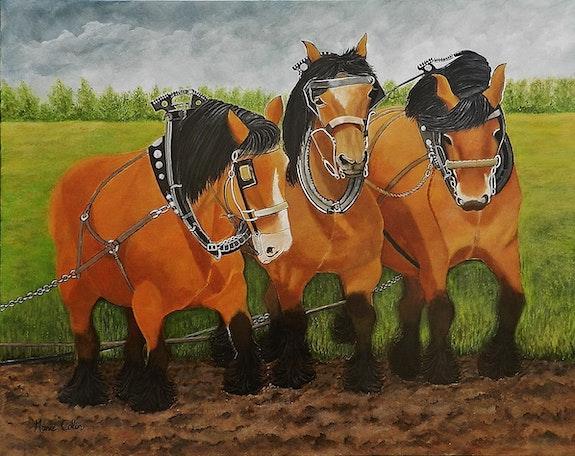 Les chevaux de trait Ardennais. Marie Colin Marie Colin