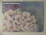 Floraison. Isabelle Moreno