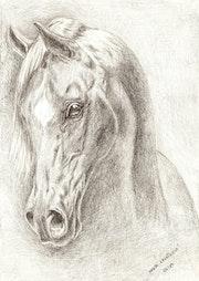 Horse, my heart..