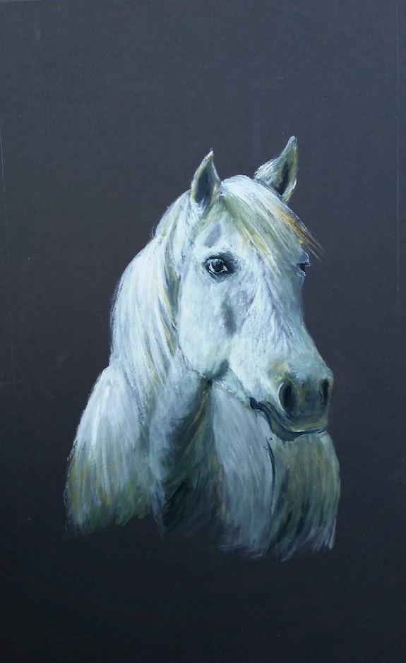 Le cheval Camarguais. Julia Colletto Julia. Colletto