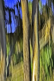 Moving Trees #33 Abstract wall hanging. Welborne Fine Art