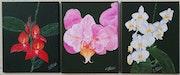Les orchidées. (Triptyque).