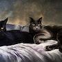 Peinture animaliére aux pastels. Jazzy et Smoky.. Suzy Estalbo Baralle