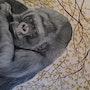 Petit Gorille » galaxie». C'line