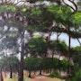 Forêt landaise. Richard Hennequin