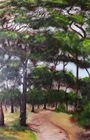 Forêt landaise.