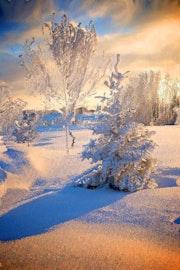 Manteau neigeux. Marie Carteron
