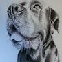 Le chien. Abdel Lakhdouri