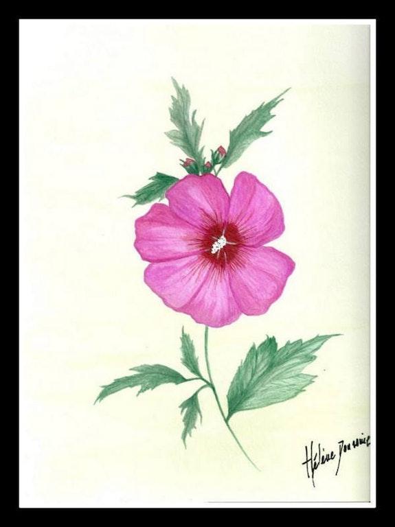 L'althéa rose. Hélène Doussine H Doussine