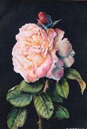 Une rose pour Jacqueline….