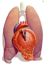 Medical Art, Emergency. Illustration & Illusion