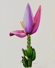 Banana Blossom. Dietrich Moravec