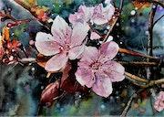 Fleurs de prunus.
