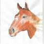 Tête de Cheval aux crayons de couleur. Joelle Wauquier