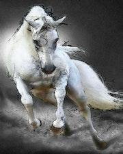 Cheval blanc fougueux. Marie Carteron
