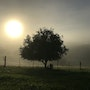 Misty Sunrise In The Countryside. Fabs